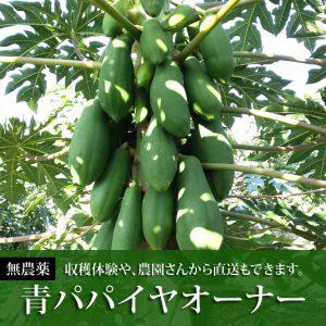 aopapaiya_shikaku